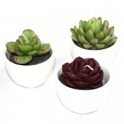 Caja 6 Velas maceta cactus