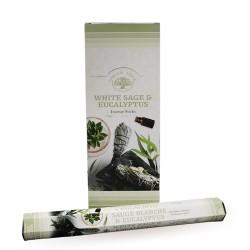 6 packs Incienso Green Tree - Salvia blanca y eucalipto