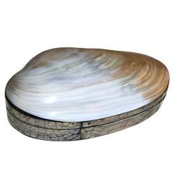 Caja grande concha de mar