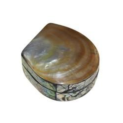 4 Cajas pequeña concha de mar