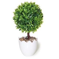 Arbolito hoja espatulada verde