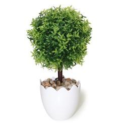 Arbolito hoja lanceolada verde