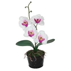Orquídea mediana blanca