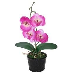 Orquídea mediana lila