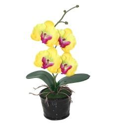 Orquídea mediana amarilla