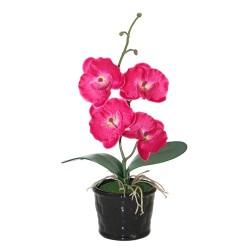 Orquídea mediana fucsia