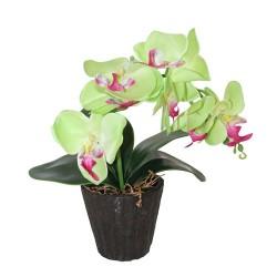Orquídea grande verde lima