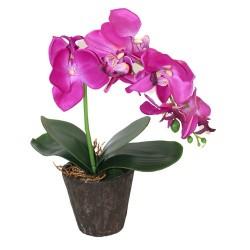 Orquídea grande púrpura