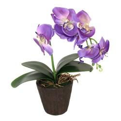 Orquídea grande lavanda
