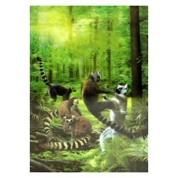 3 Láminas 3D lemur Madagascar