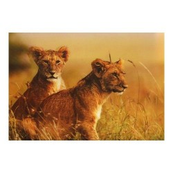 3 Láminas 3D leonas
