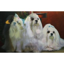 10 Láminas 3D gatitos | cachorros