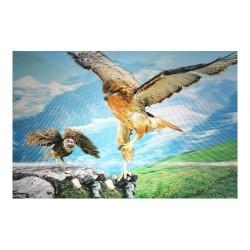 10 Láminas águila