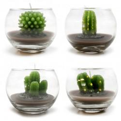 Caja 12 velas vaso redondo - cactus variados
