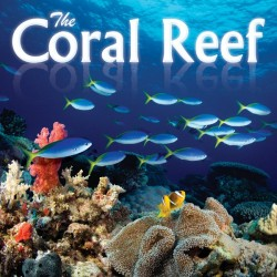 Nature The Coral Reef